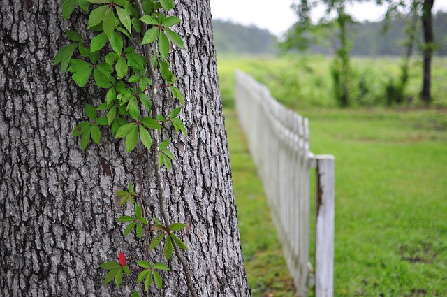 dřevěný plot za stromem